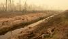 EU ausgetrickst:<BR>Indonesien hebt Rodungsstopp von Torfmoorgebieten für Ölpalmplantagen auf