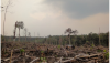 Joint Open Letter to the Consumer Goods Forum – It's Time to Stop the Fires and Deliver on 'No Deforestation, No Peat, No Exploitation' Commitments