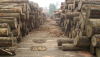 Urwaldschutzgesetz abgelehnt<br>Handel mit illegalem Holz bleibt straffrei