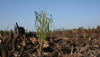 European Union and French Presidency seek to push forward with destructive and unsustainable biofuel target