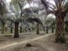 """Veranstaltungsreihe """"Nachhaltiges Palmöl? Was Biokraftstoffe uns versprechen"""""""