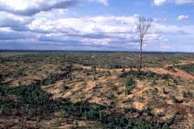 AbholzungFoto: Hans-Georg Gaul