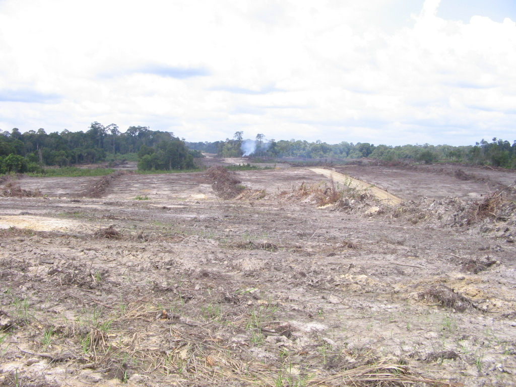 land clearing in border_Feri