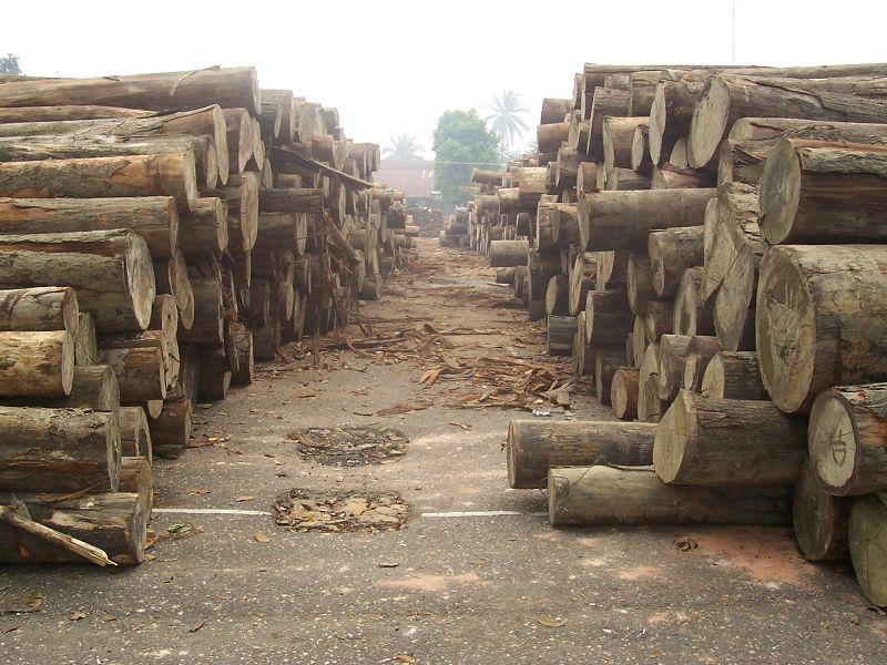 logging_Feri